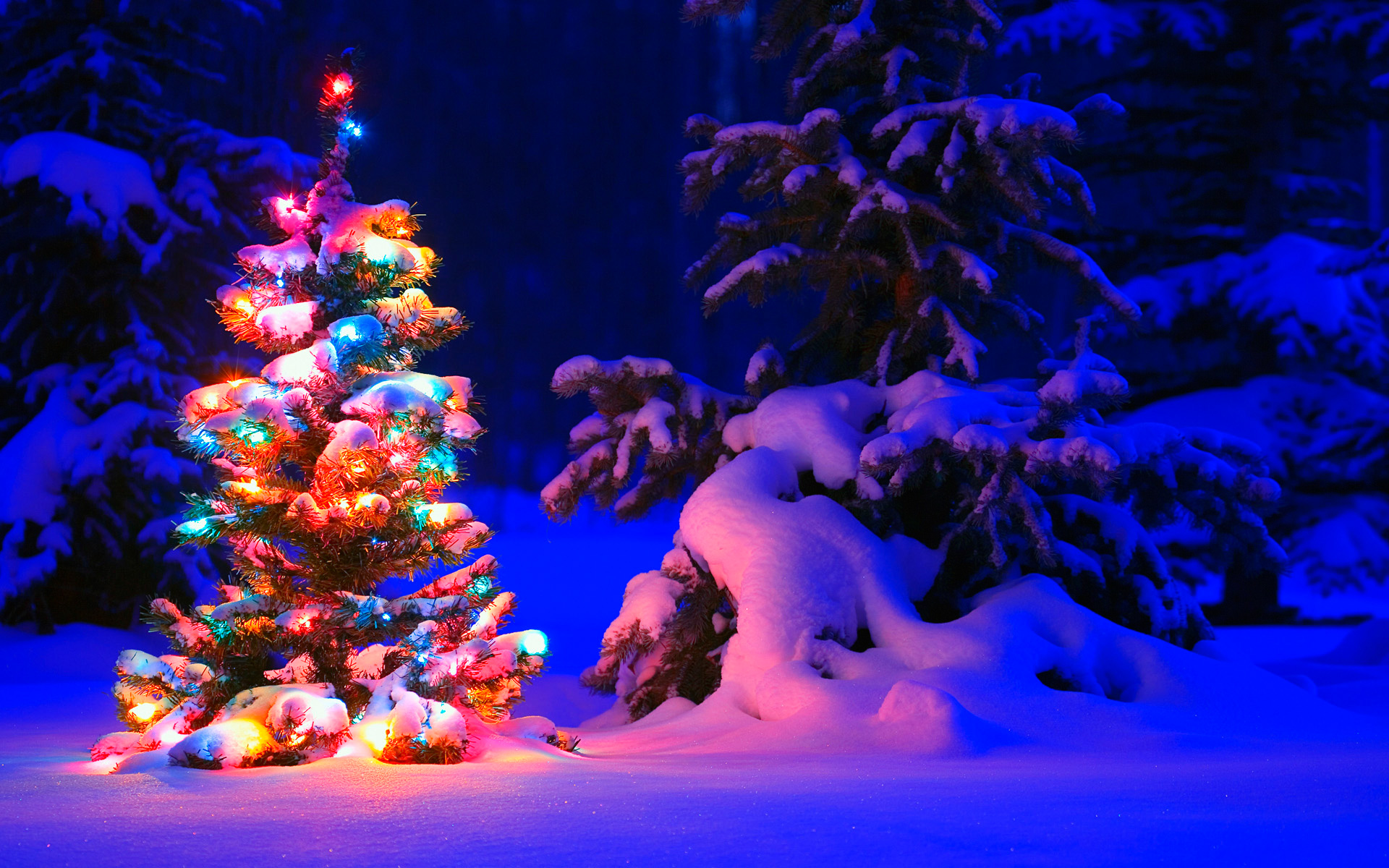 0 2953 wallpapers for christmas snowy christmas tree lights