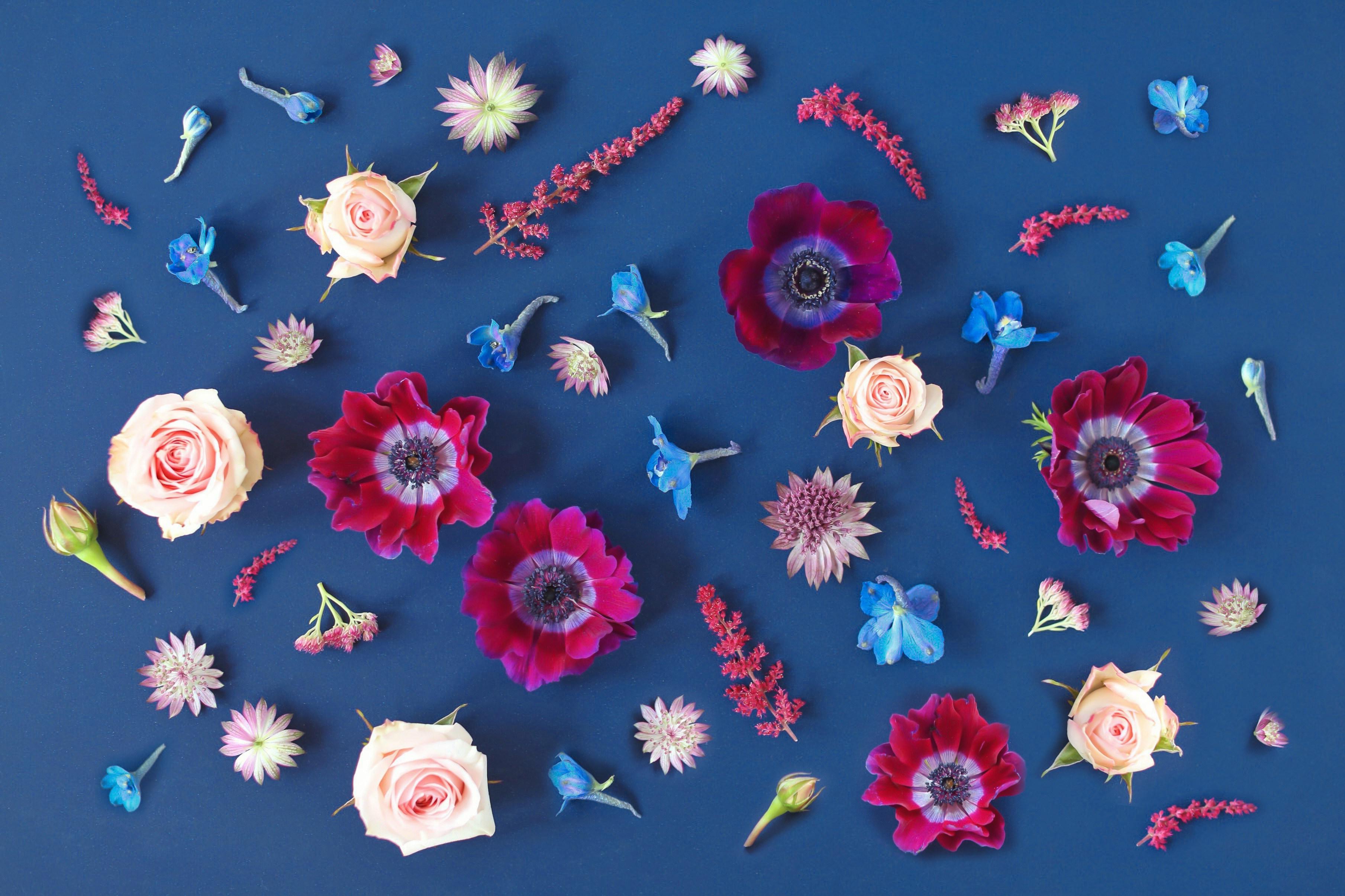 花 デスクトップの壁紙 3618x2410 Wallpapertip