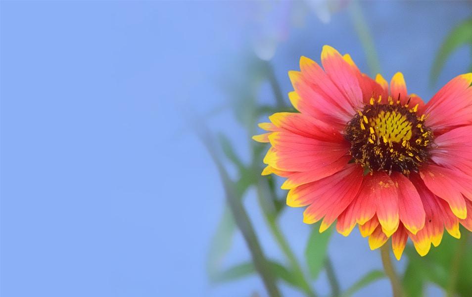 Desktop Background Hd Flower