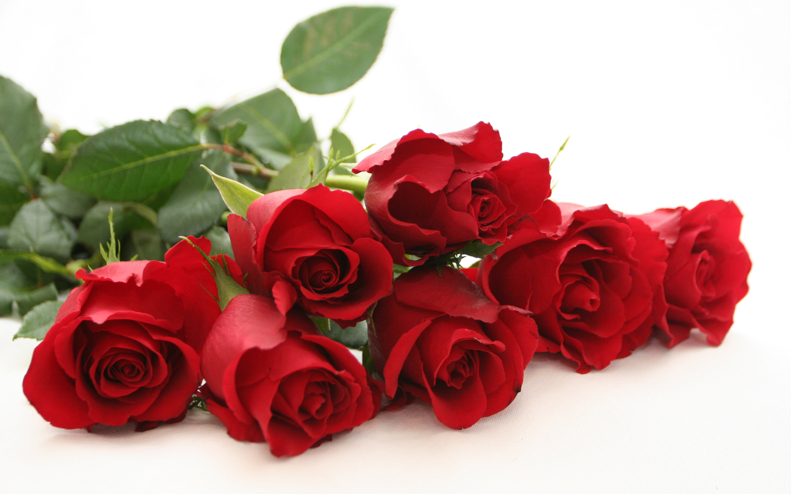 Rose Wallpaper Flowers 2560x1600 Download Hd Wallpaper Wallpapertip