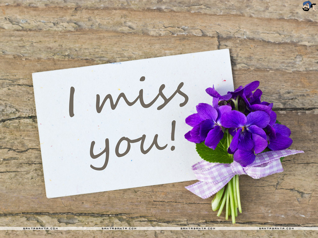 Miss You Miss You Quotes Flower 1024x768 Download Hd Wallpaper Wallpapertip