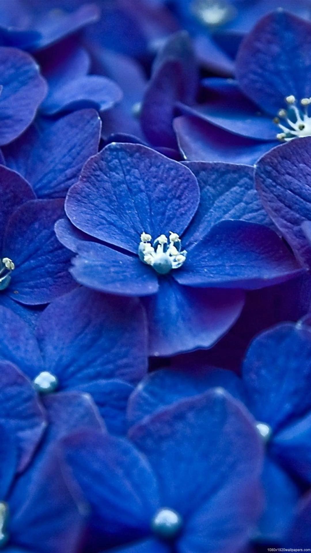 Flowers Blue White Wallpapers Hd Hd Flower Wallpaper 1080p For Mobile 1080x1920 Download Hd Wallpaper Wallpapertip