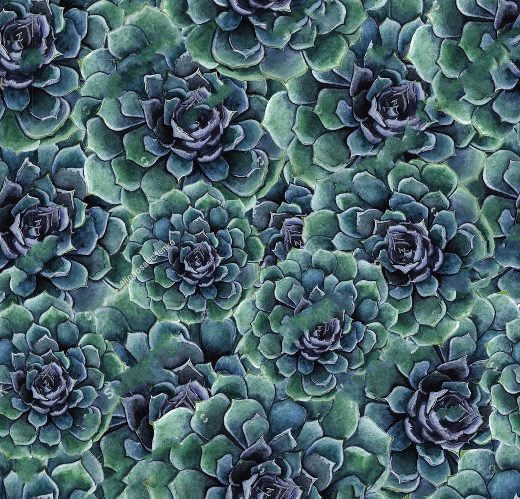 Watercolor High Resolution Succulent Background 1050x1008 Download Hd Wallpaper Wallpapertip