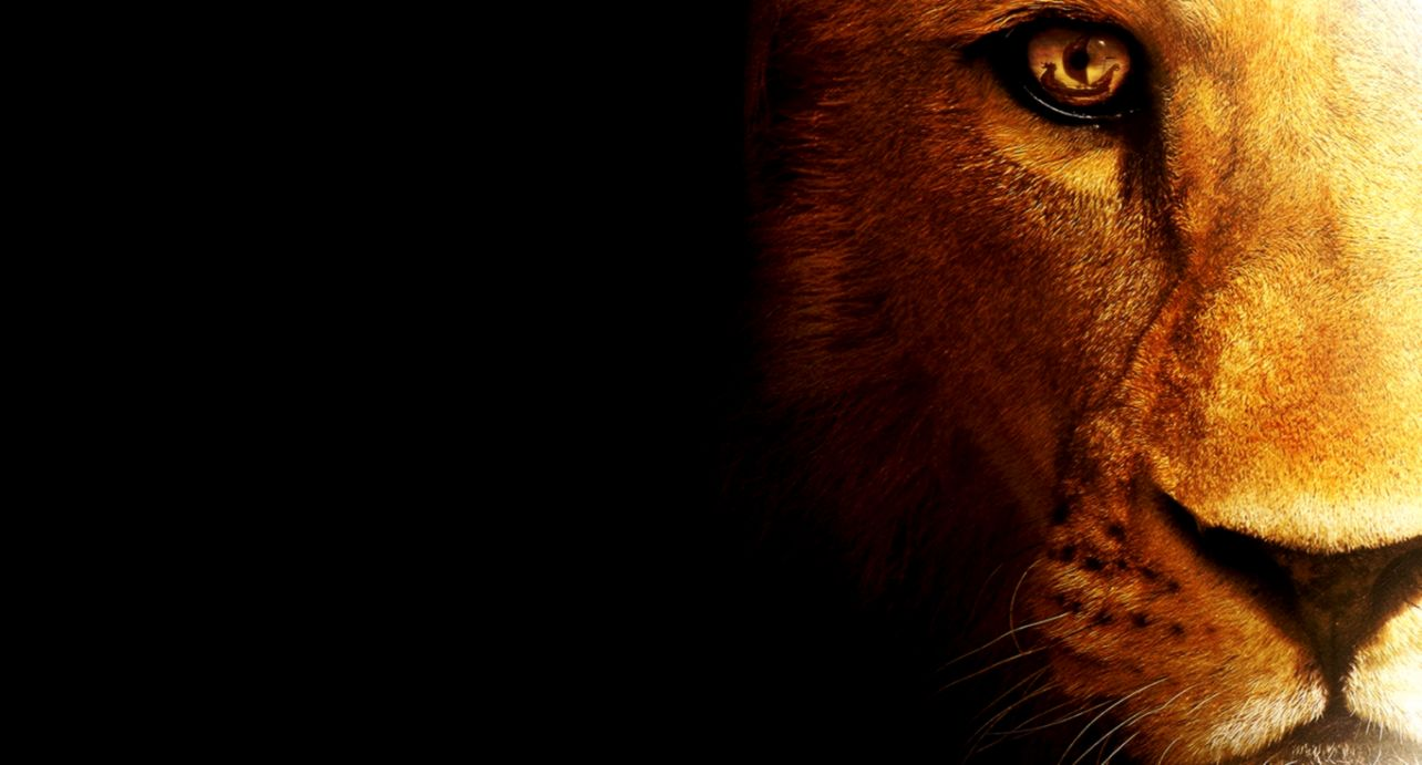 Hd Wallpapers For Desktop Lion