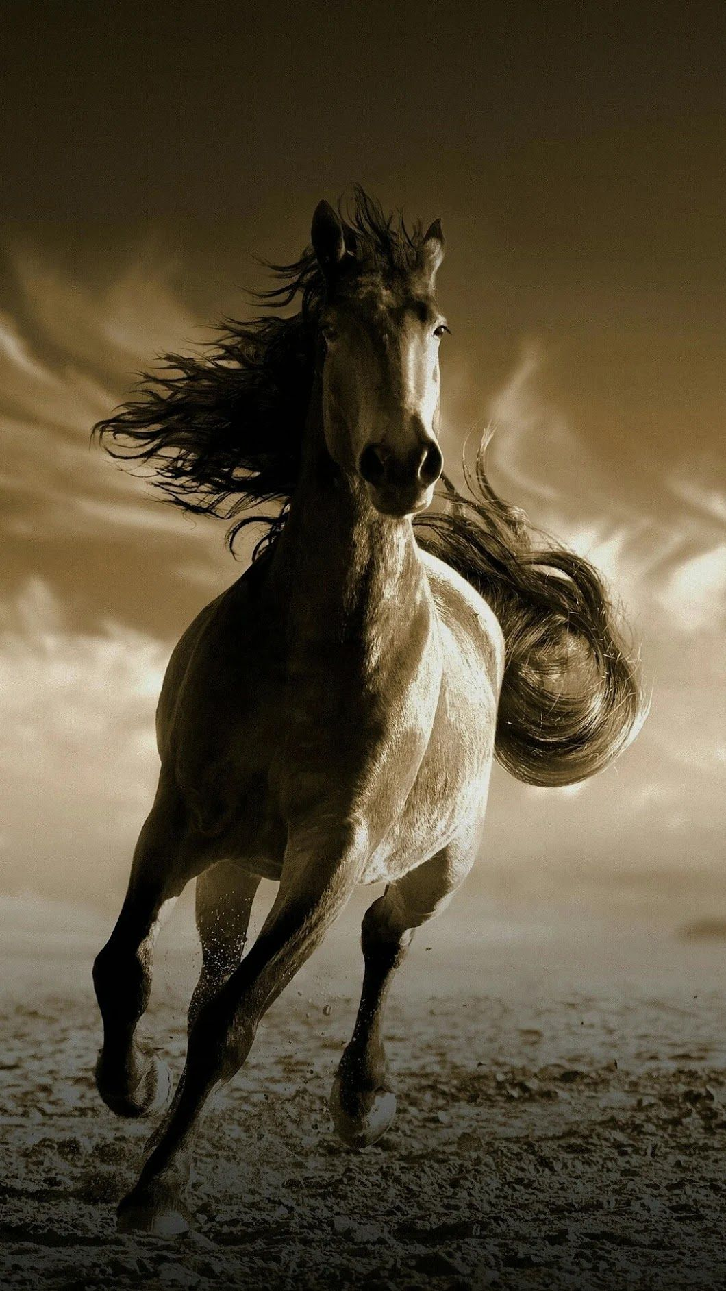 Running Horse Hd Wallpaper For Mobile 1060x1884 Download Hd Wallpaper Wallpapertip