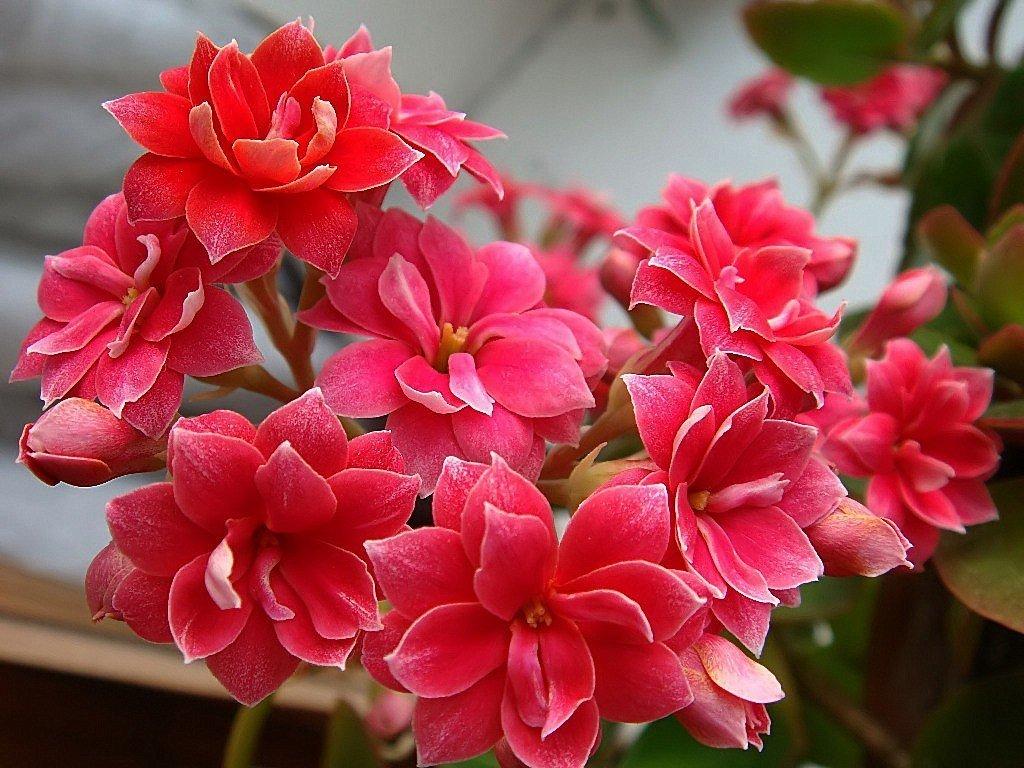 Mobile Full Hd Flower Hd 1024x768 Download Hd Wallpaper Wallpapertip