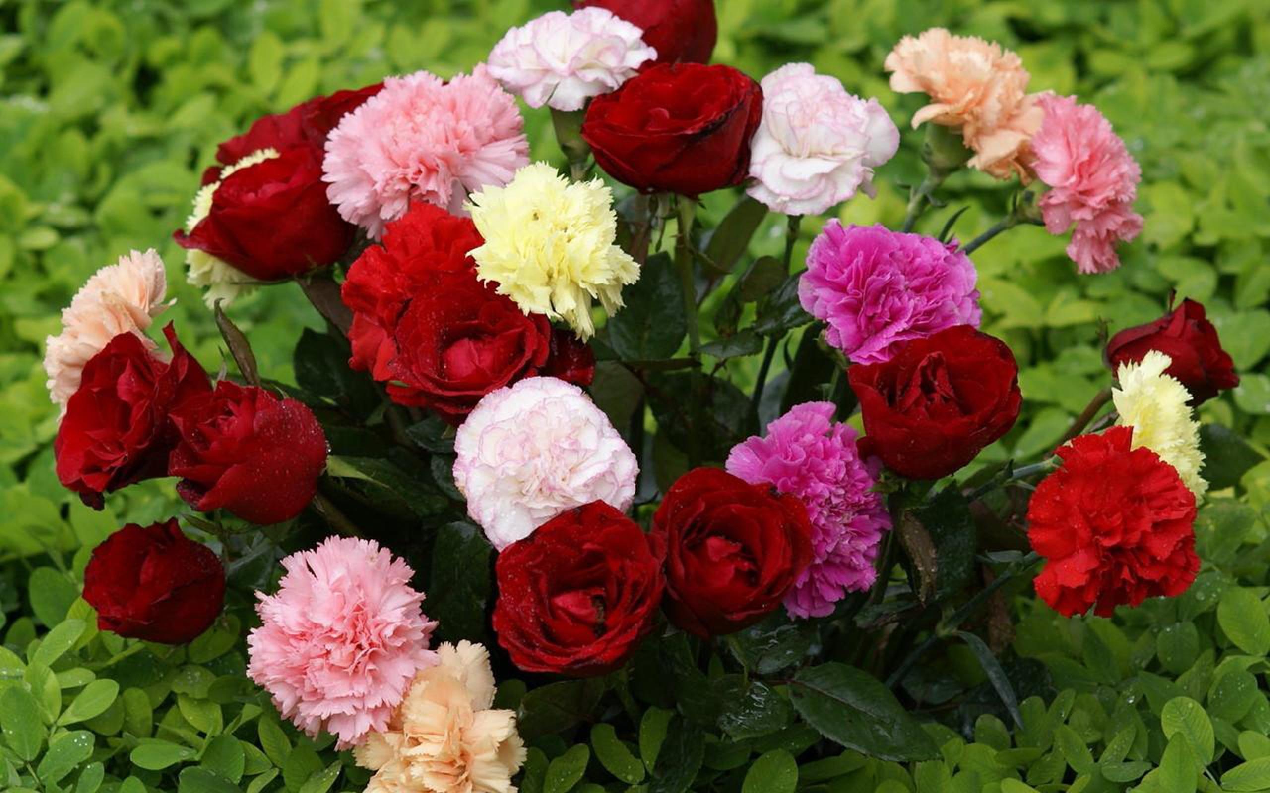 Beautiful Flowers Pic Hd 2560x1600 Download Hd Wallpaper Wallpapertip