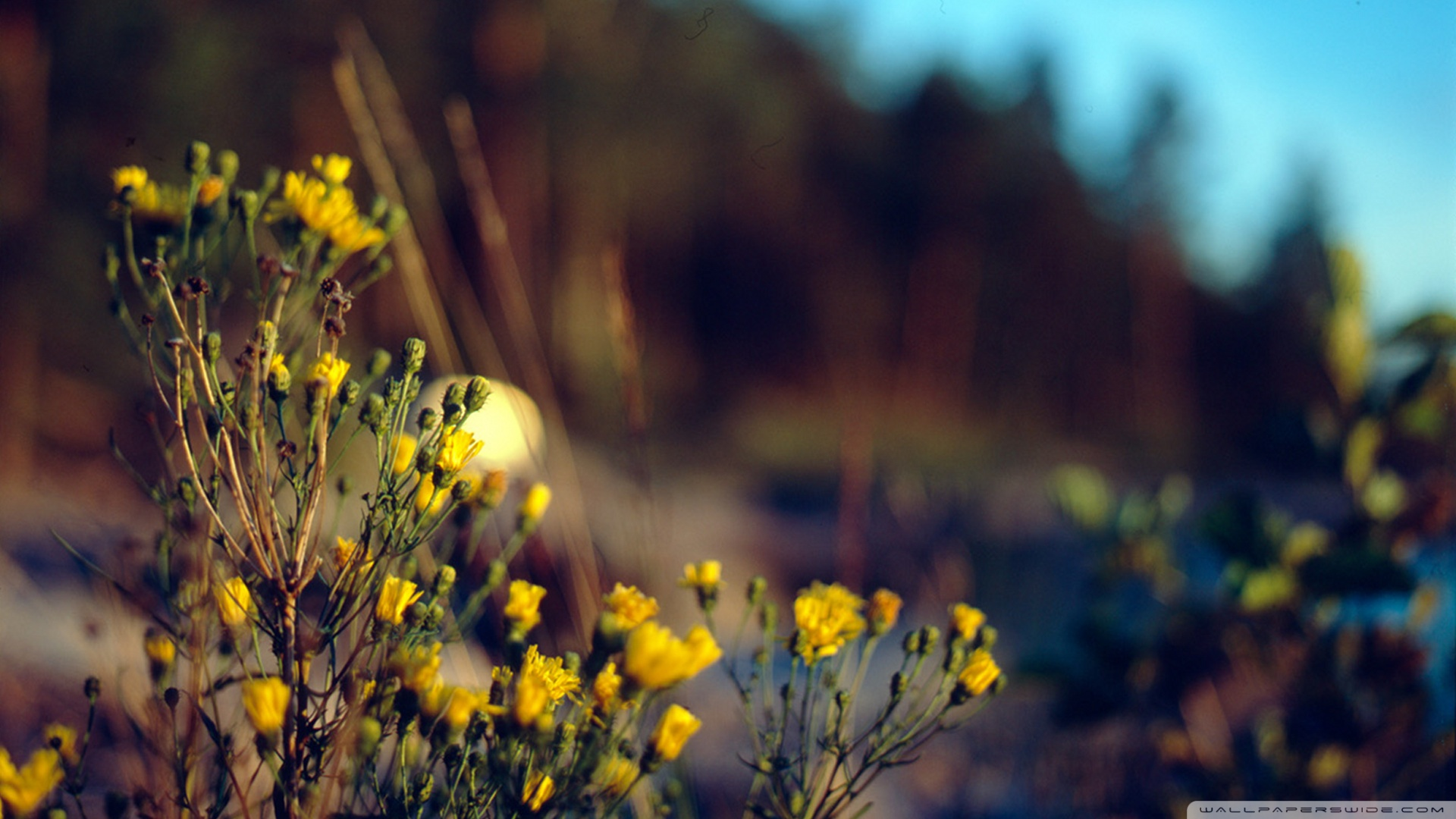 Professional Photography Nature Background Hd 1920x1080 Download Hd Wallpaper Wallpapertip