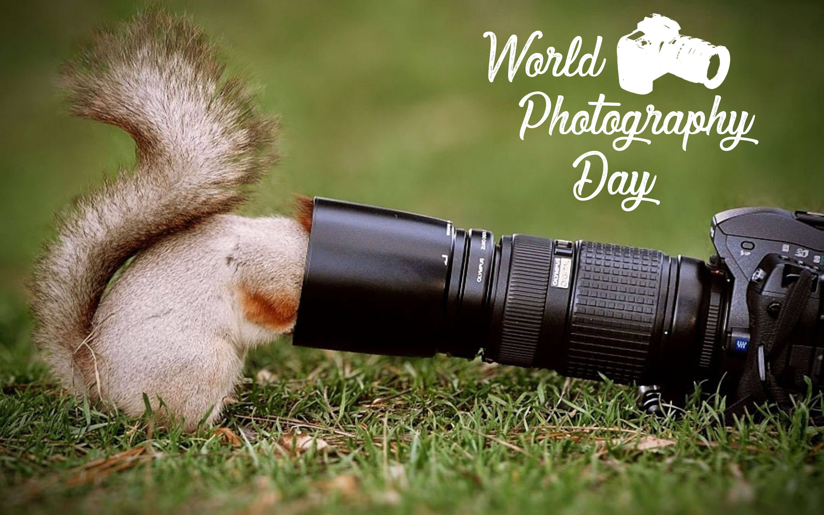World Photography Day Squirrel In Camera Lens Hd Wallpaper Photography Hd 2880x1800 Download Hd Wallpaper Wallpapertip