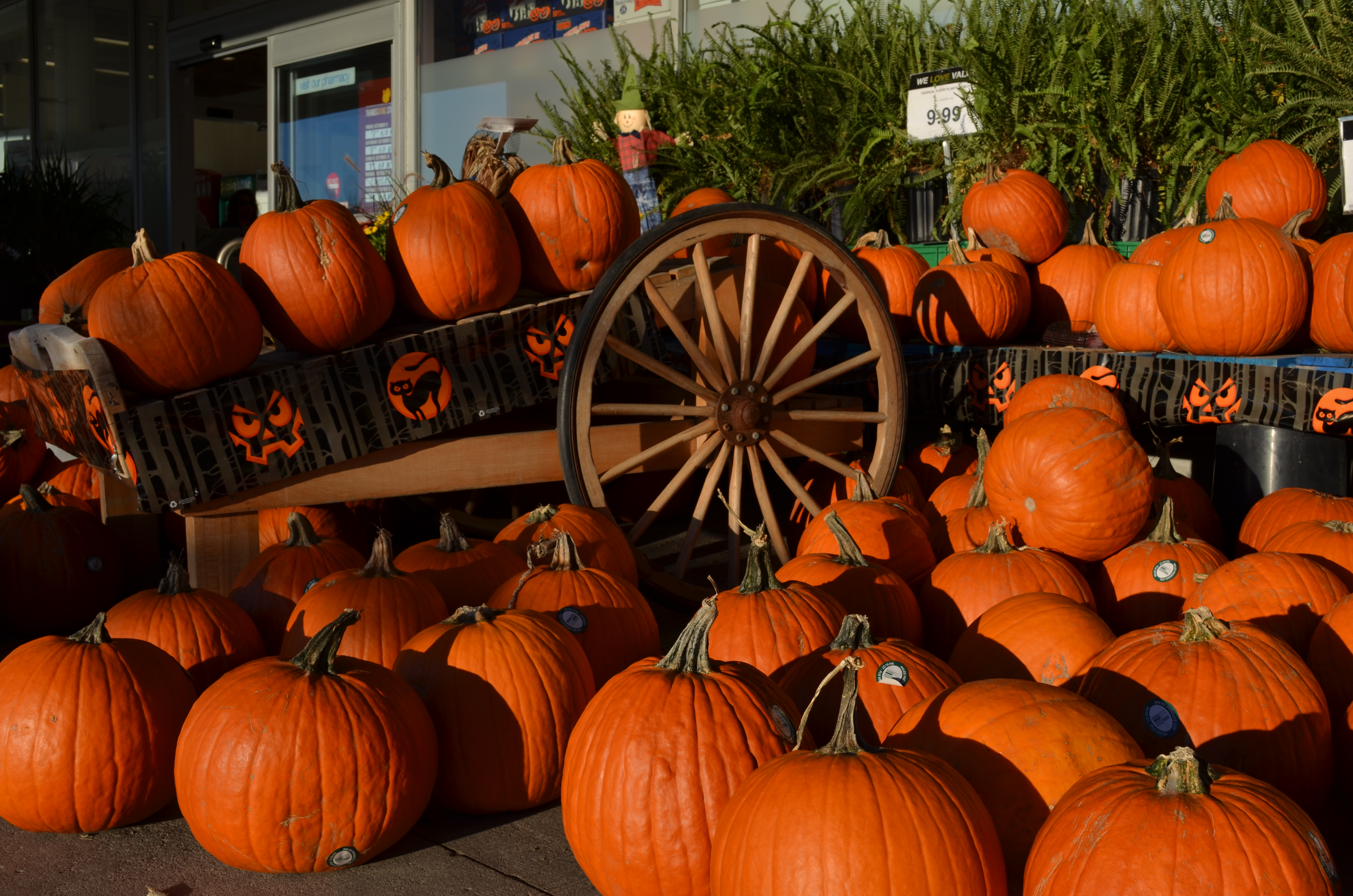 12 120504 fall pumpkin desktop backgrounds pumpkins fall desktop backgrounds