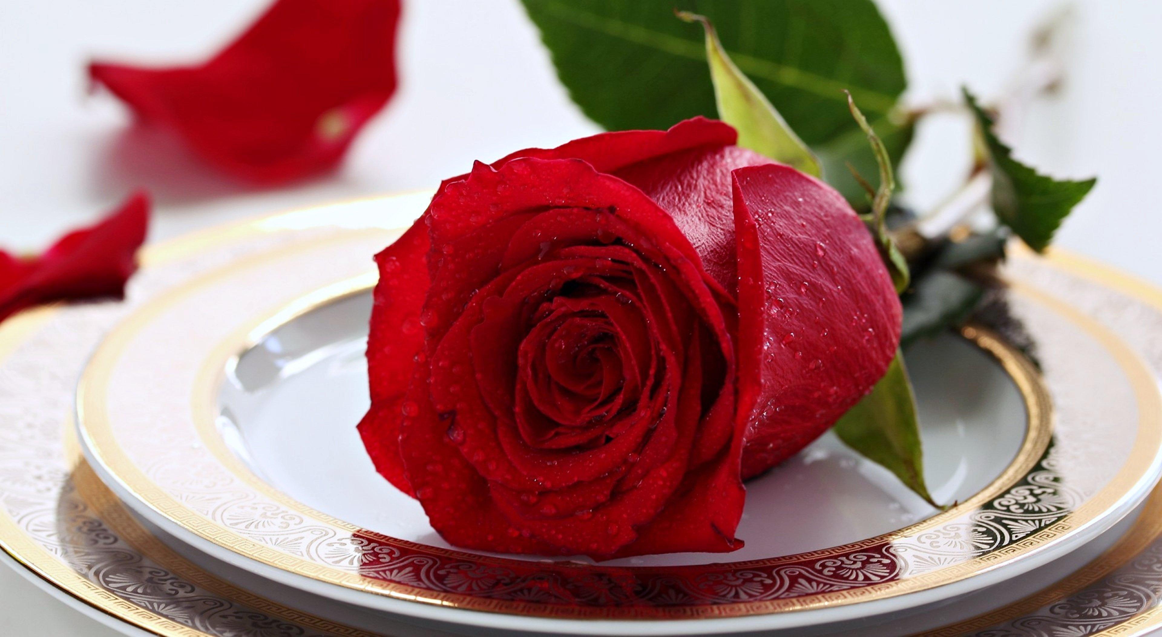 Teller Rote Rosenblume Gulab Ka Phool Tapete 3840x2104 Wallpapertip