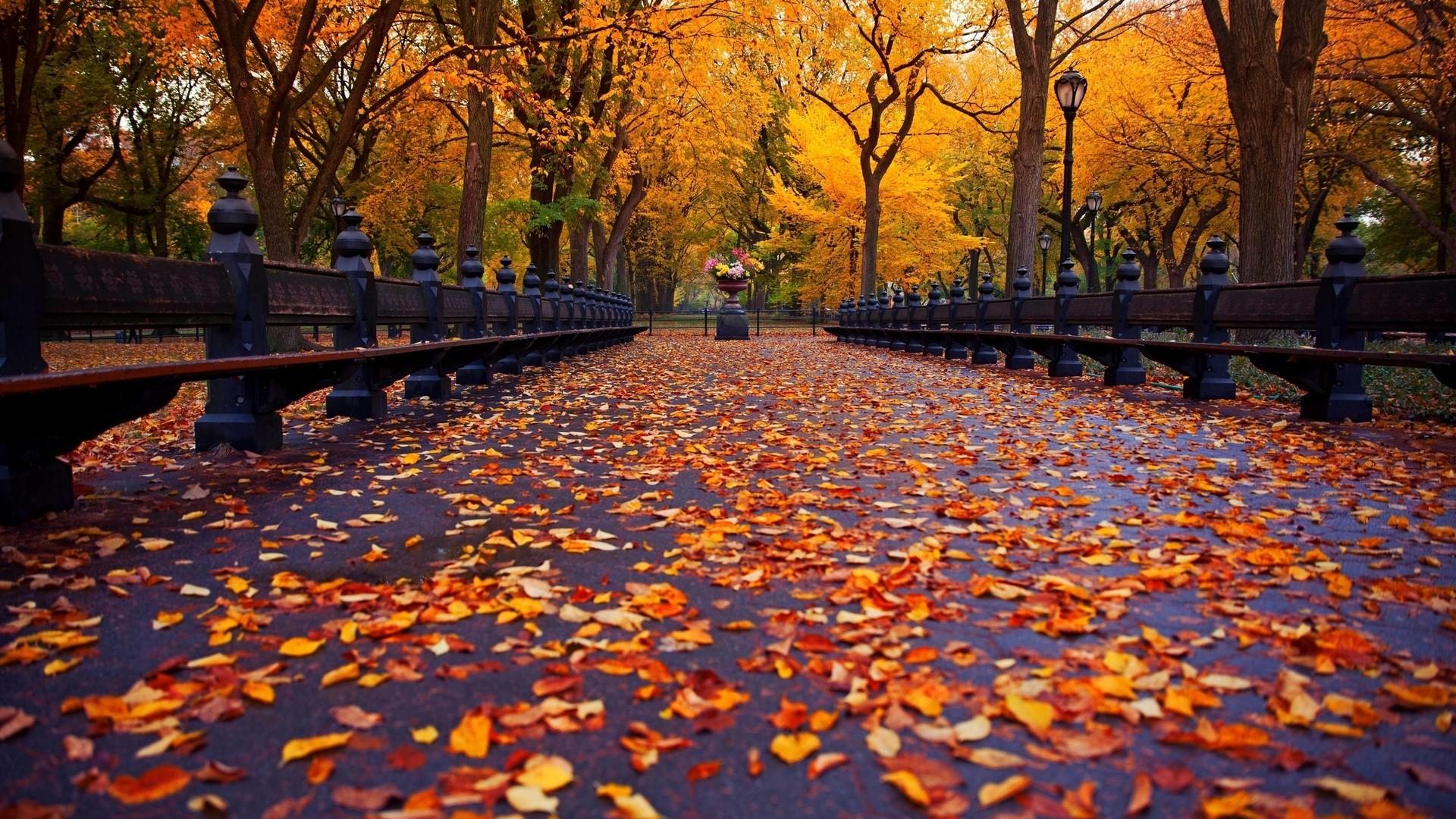秋の壁紙のhd かわいい秋の壁紙 19x1080 Wallpapertip