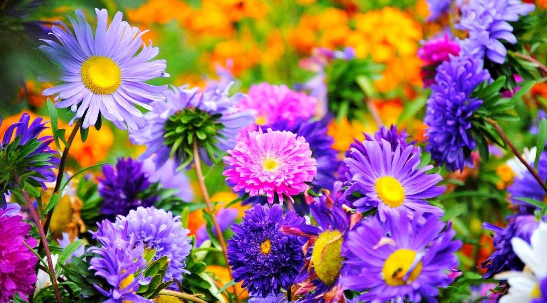 Gambar Wallpaper Bunga Cantik Indah Bunga Sangat Indah 1358x753 Download Hd Wallpaper Wallpapertip