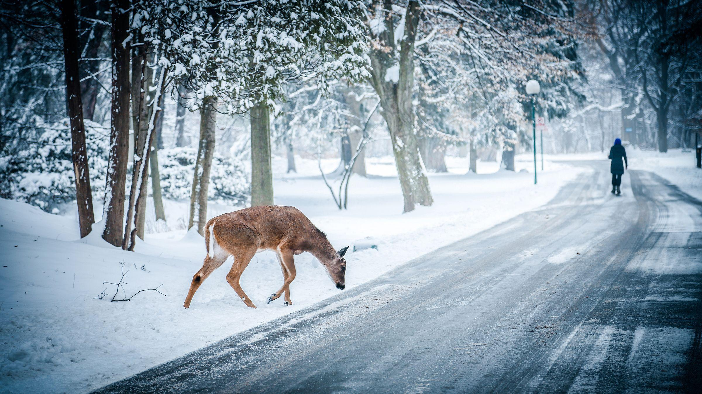 Winter Scene Desktop Wallpaper Desktop Wallpaper Snow Scenes 2400x1350 Download Hd Wallpaper Wallpapertip