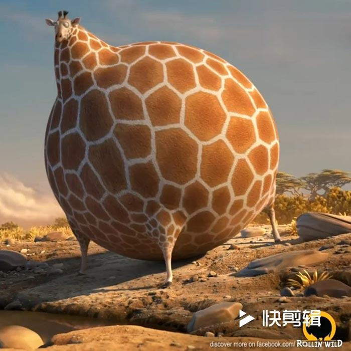 Giraffe Wallpaper الوضع بعد الفطور في رمضان 700x700 Download Hd Wallpaper Wallpapertip
