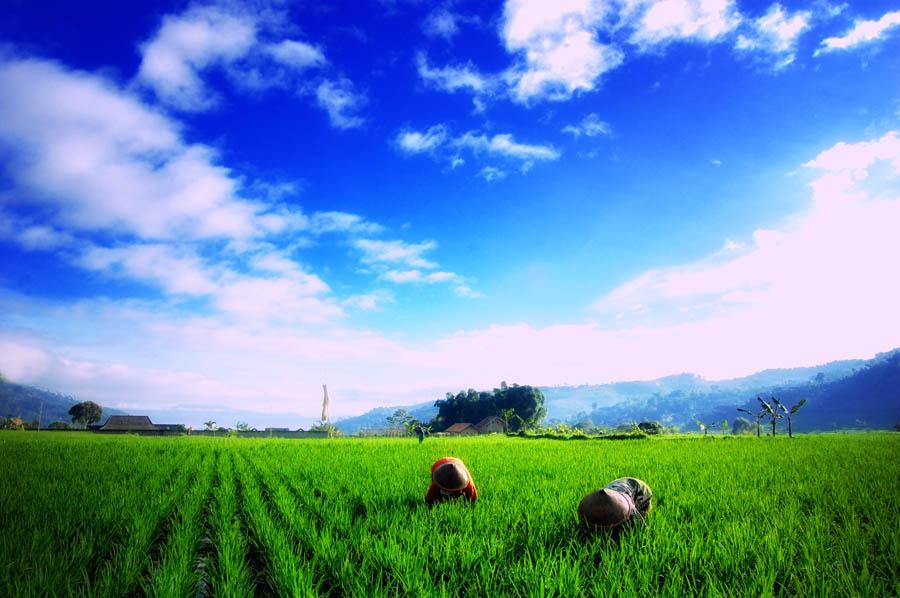 Wallpaper Pemandangan Indah Hd - Pemandangan Sawah - 900x598 - Download HD  Wallpaper - WallpaperTip