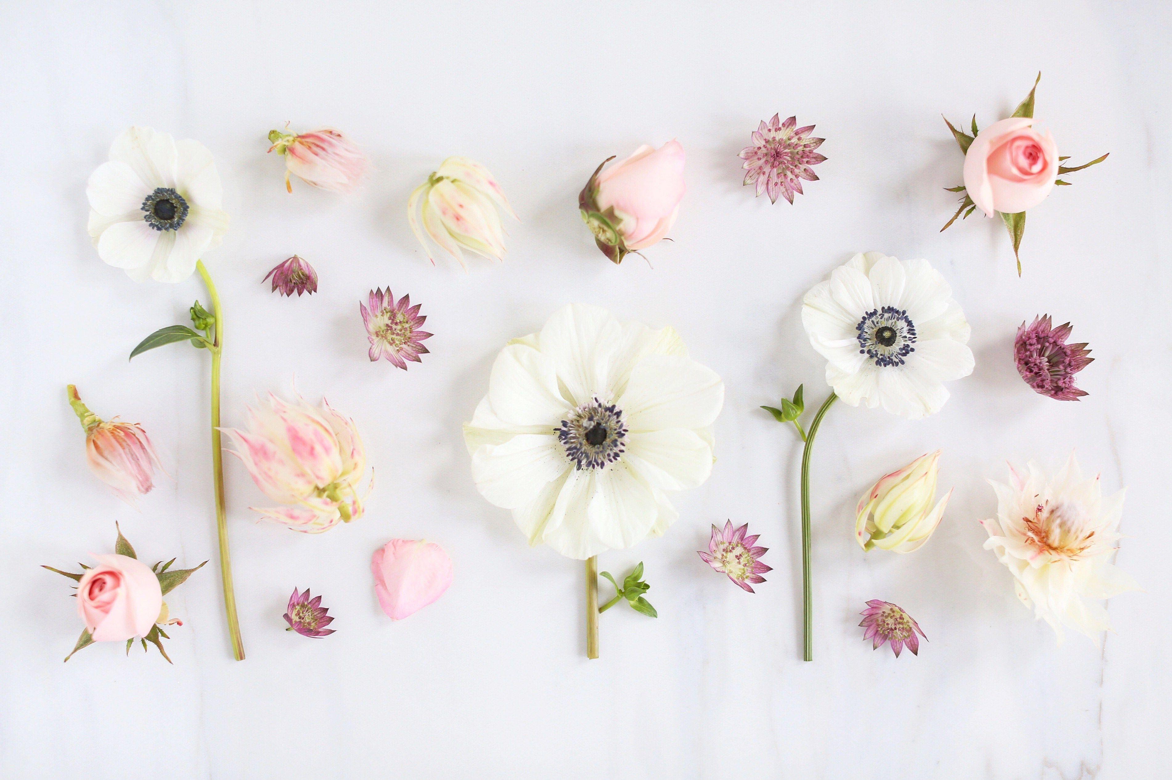 Aesthetic Desktop Wallpaper Flower 3803x2533 Download Hd Wallpaper Wallpapertip