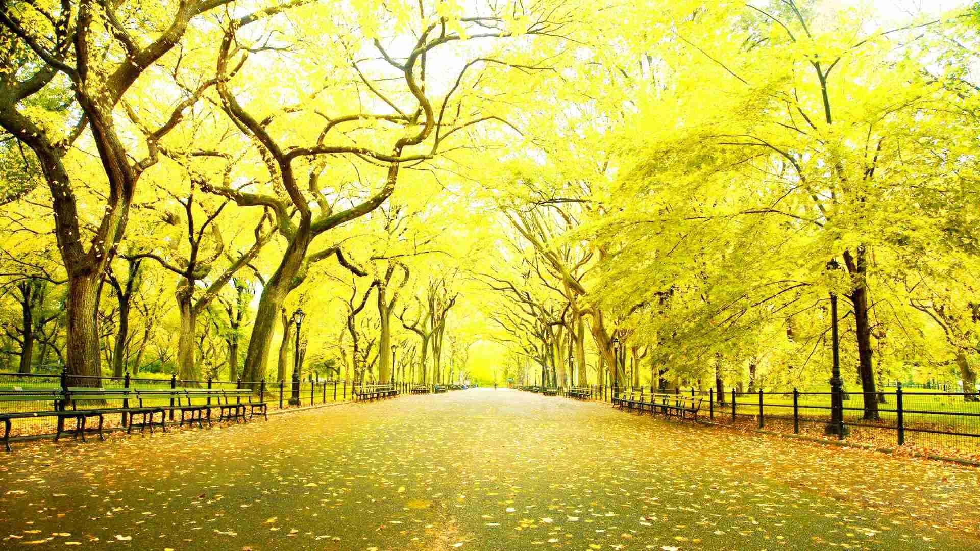ニューヨークセントラルパーク秋 Hd壁紙1080pワイドスクリーン 19x1080 Wallpapertip