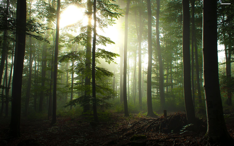Forest Wallpaper Forest Wallpaper 4k 1600x1000 Download Hd Wallpaper Wallpapertip