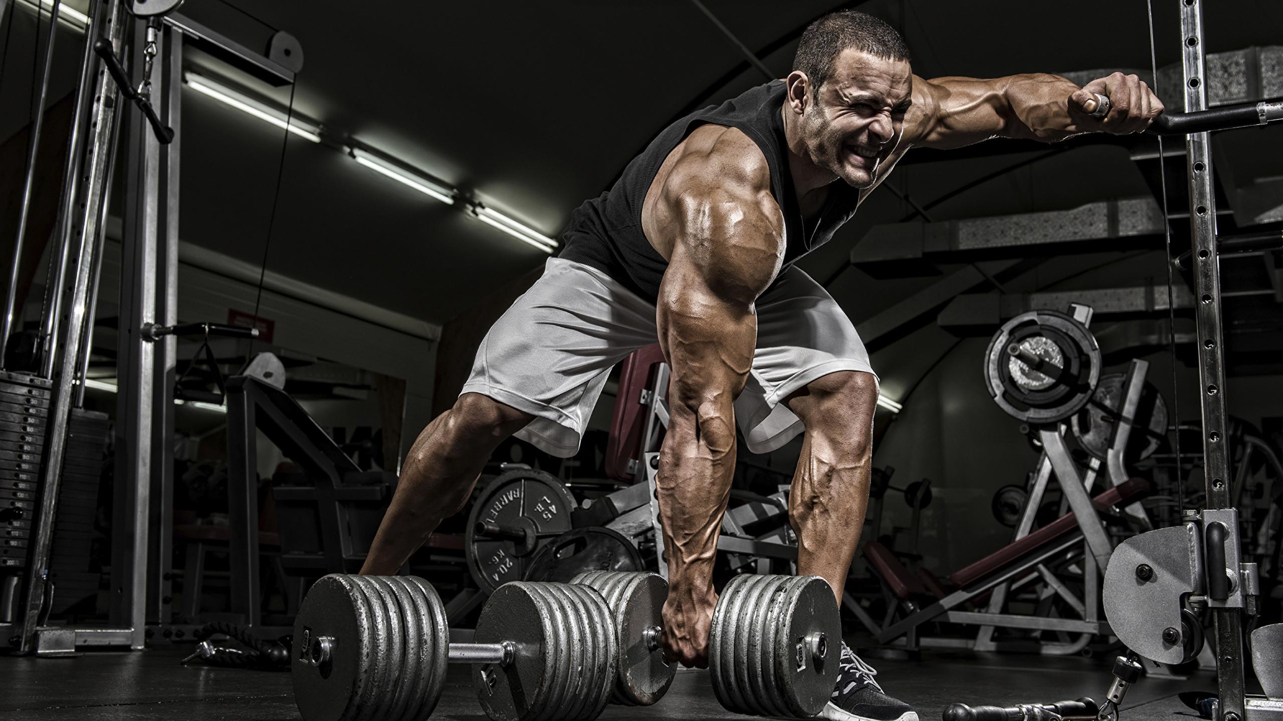 Wallpapers Man Gym Muscle Workout Sport Dumbbells Bodybuilding -  Bodybuilding - 2560x1440 - Download HD Wallpaper - WallpaperTip