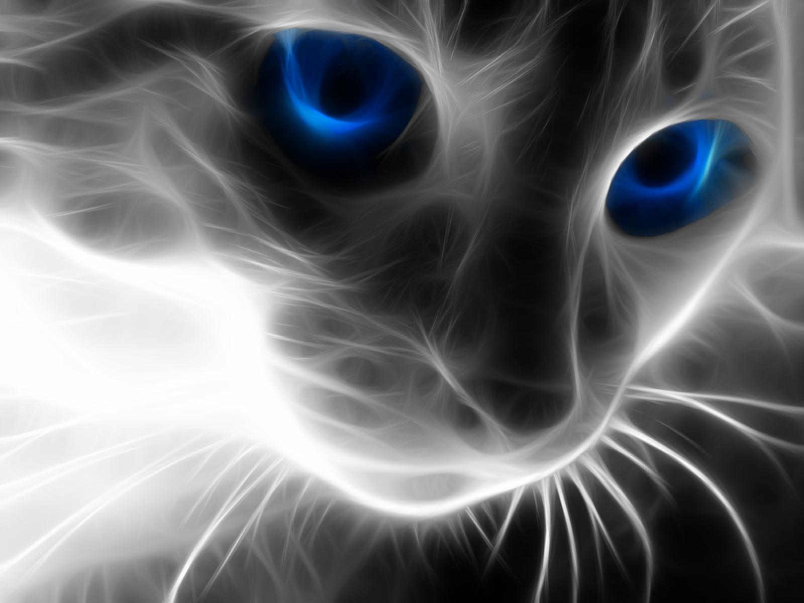 Cool Wallpapers Cool Cat 1600x1200 Download Hd Wallpaper Wallpapertip