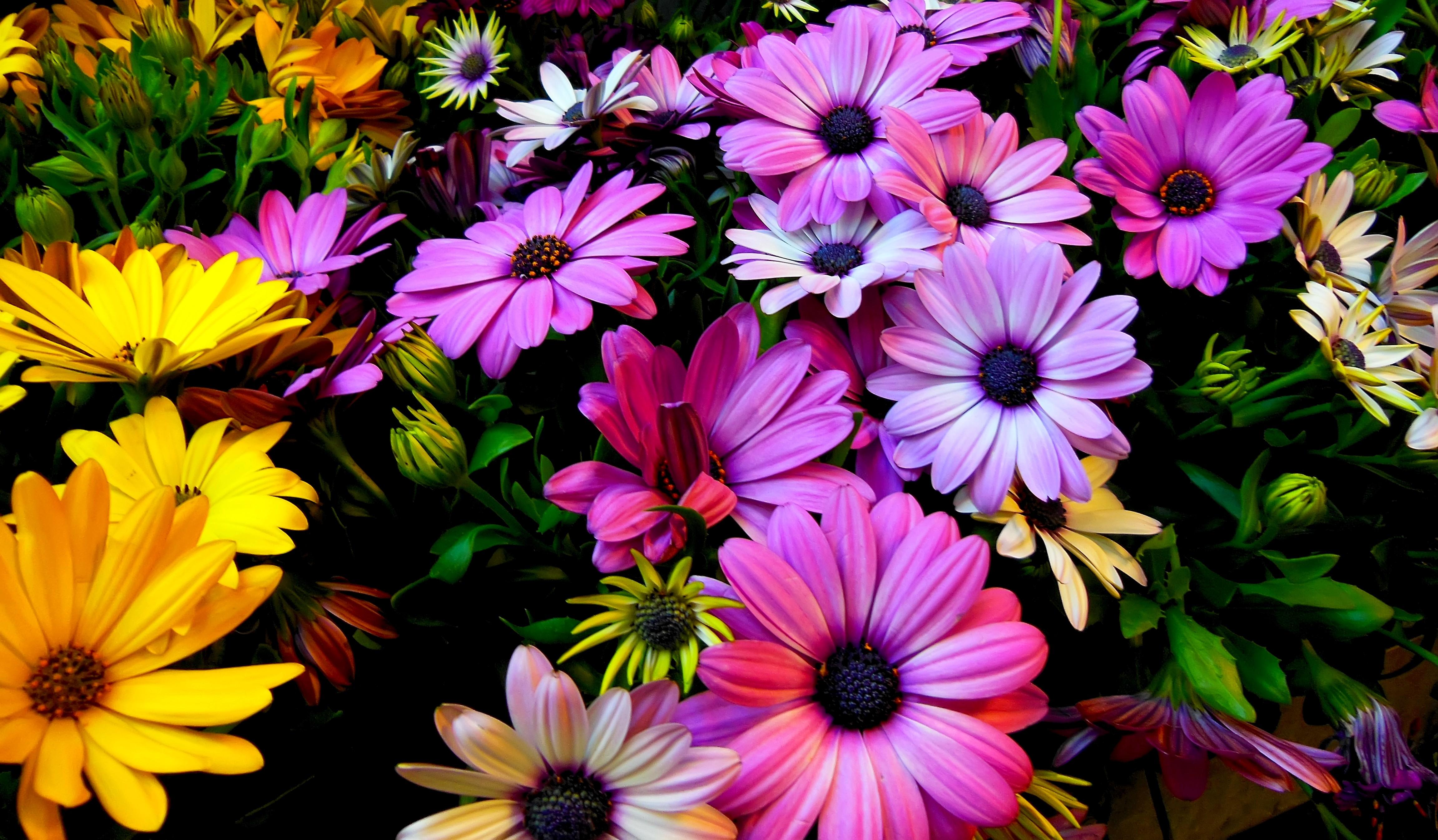 Spring Flowers 4k 4604x2691 Download Hd Wallpaper Wallpapertip
