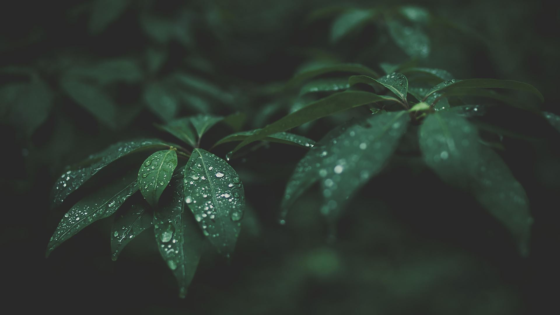 Wet Leafs Wallpaper Macro Photography 1920x1080 Download Hd Wallpaper Wallpapertip