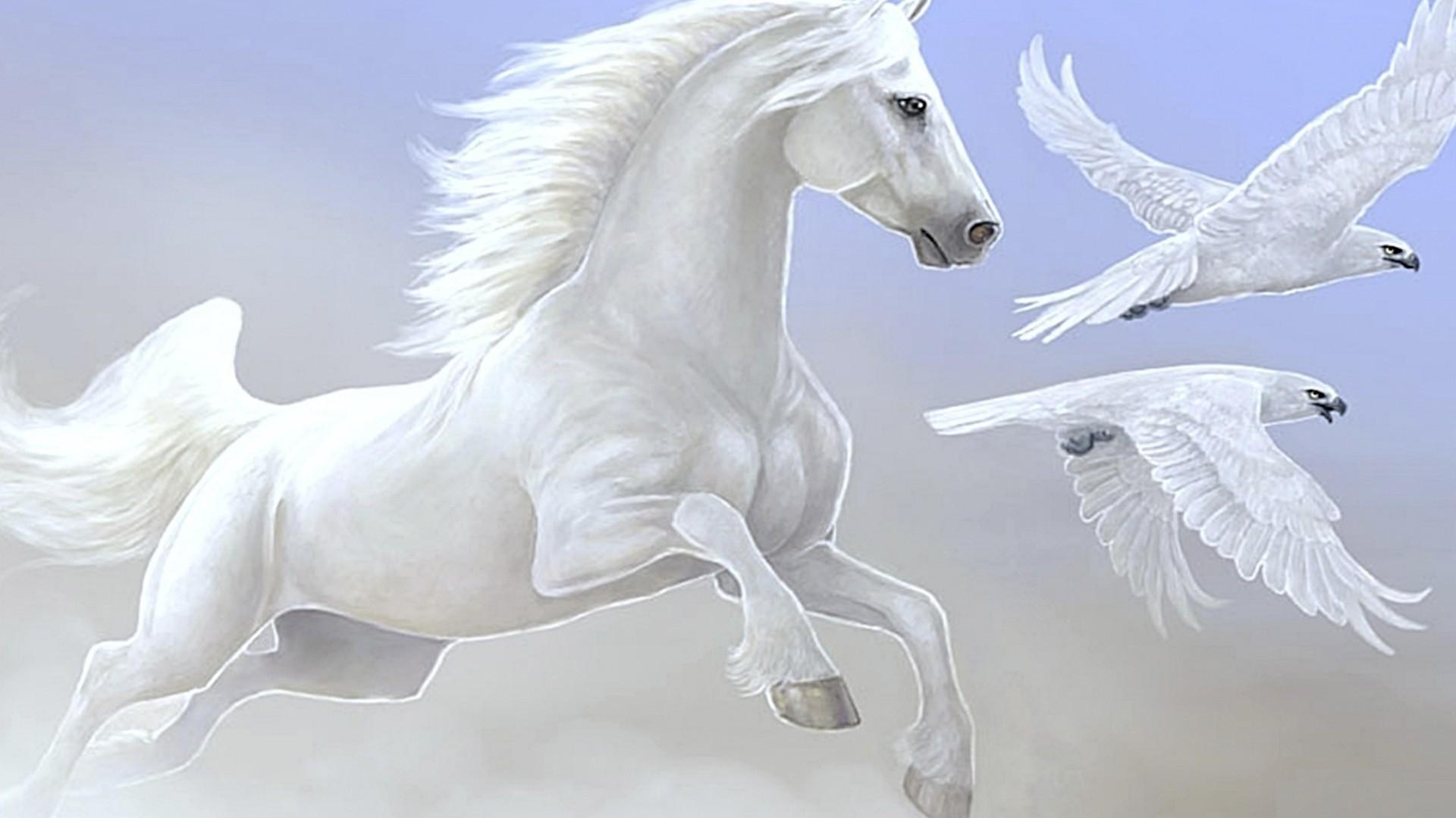 Seven Horse Wallpapers Group White Data Src Download 1920x1080 Download Hd Wallpaper Wallpapertip