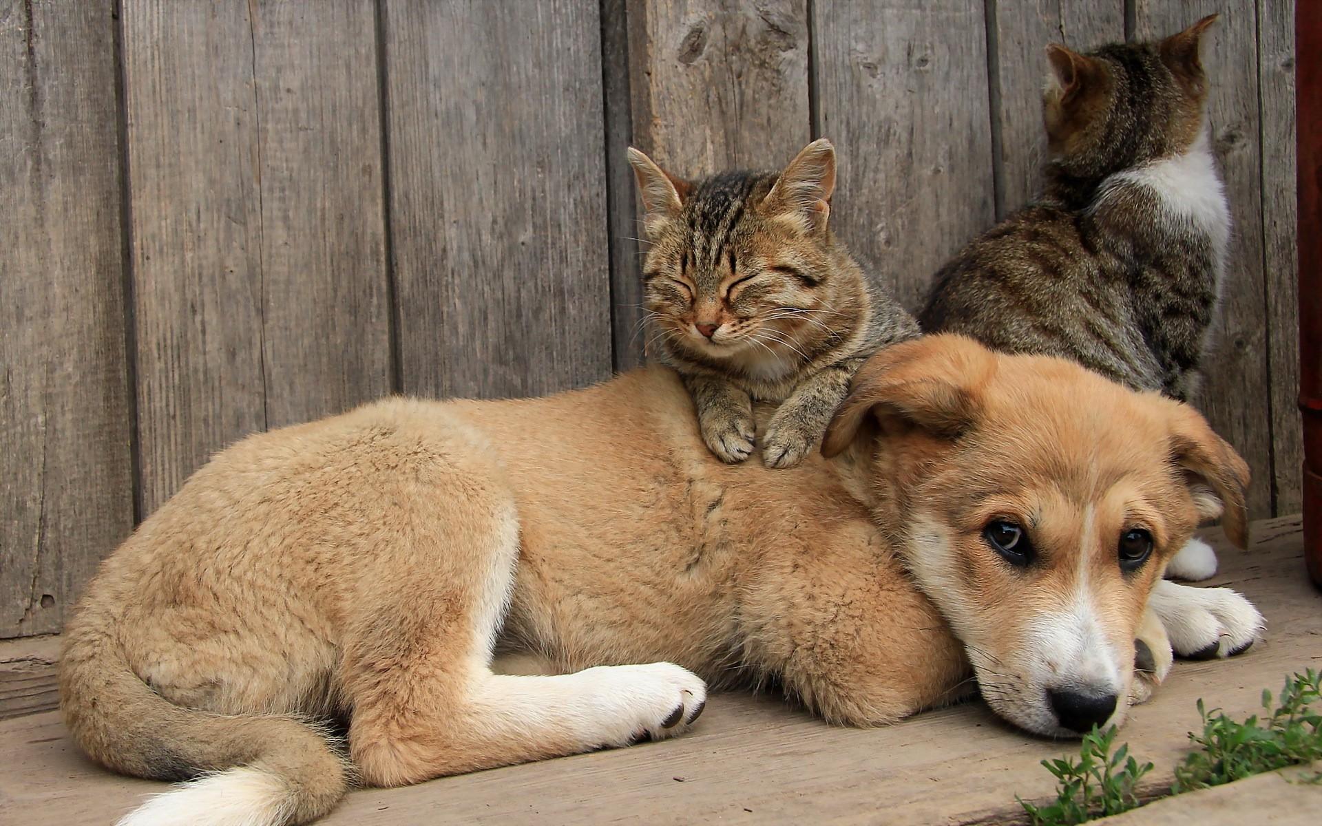 Data Src Cat Dog Friends 1920x1200 Download Hd Wallpaper Wallpapertip