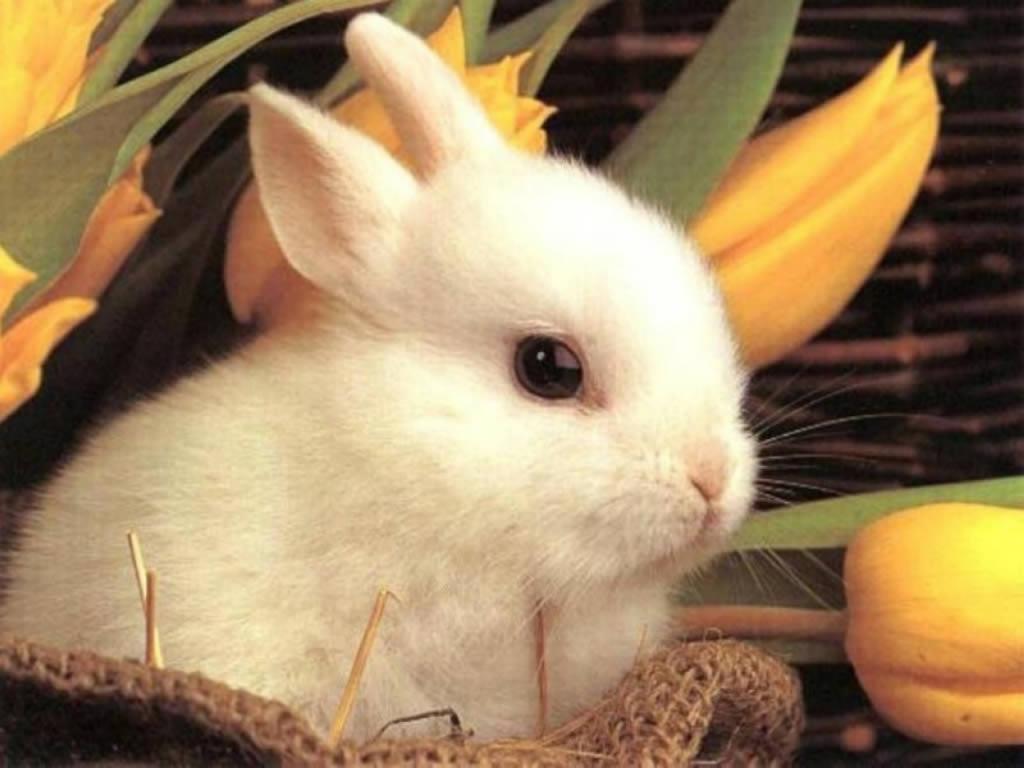 Cute Rabbit 1024x768 Download Hd Wallpaper Wallpapertip