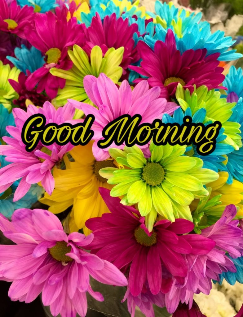 Good Morning Images With Flowers Hd - New Good Morning