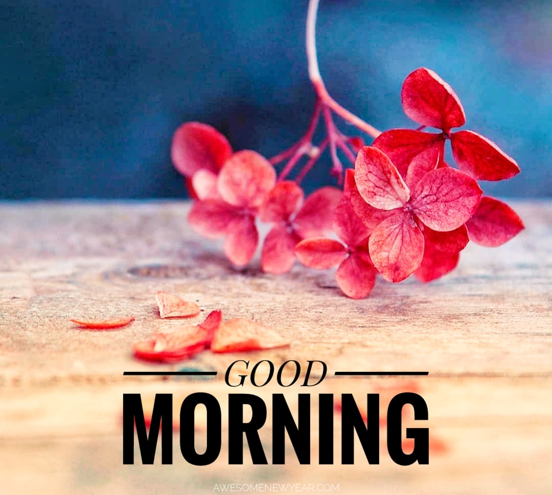 Gud Morning Wallpapers New Year Superb Good Morning 1080x968 Download Hd Wallpaper Wallpapertip