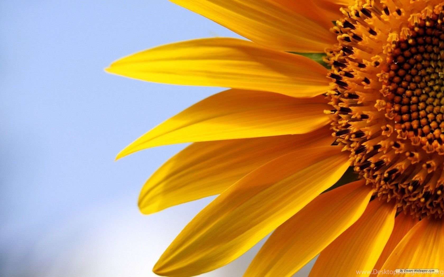 152 1528983 free wallpapers free flower wallpapers sunflower flowers sunflower