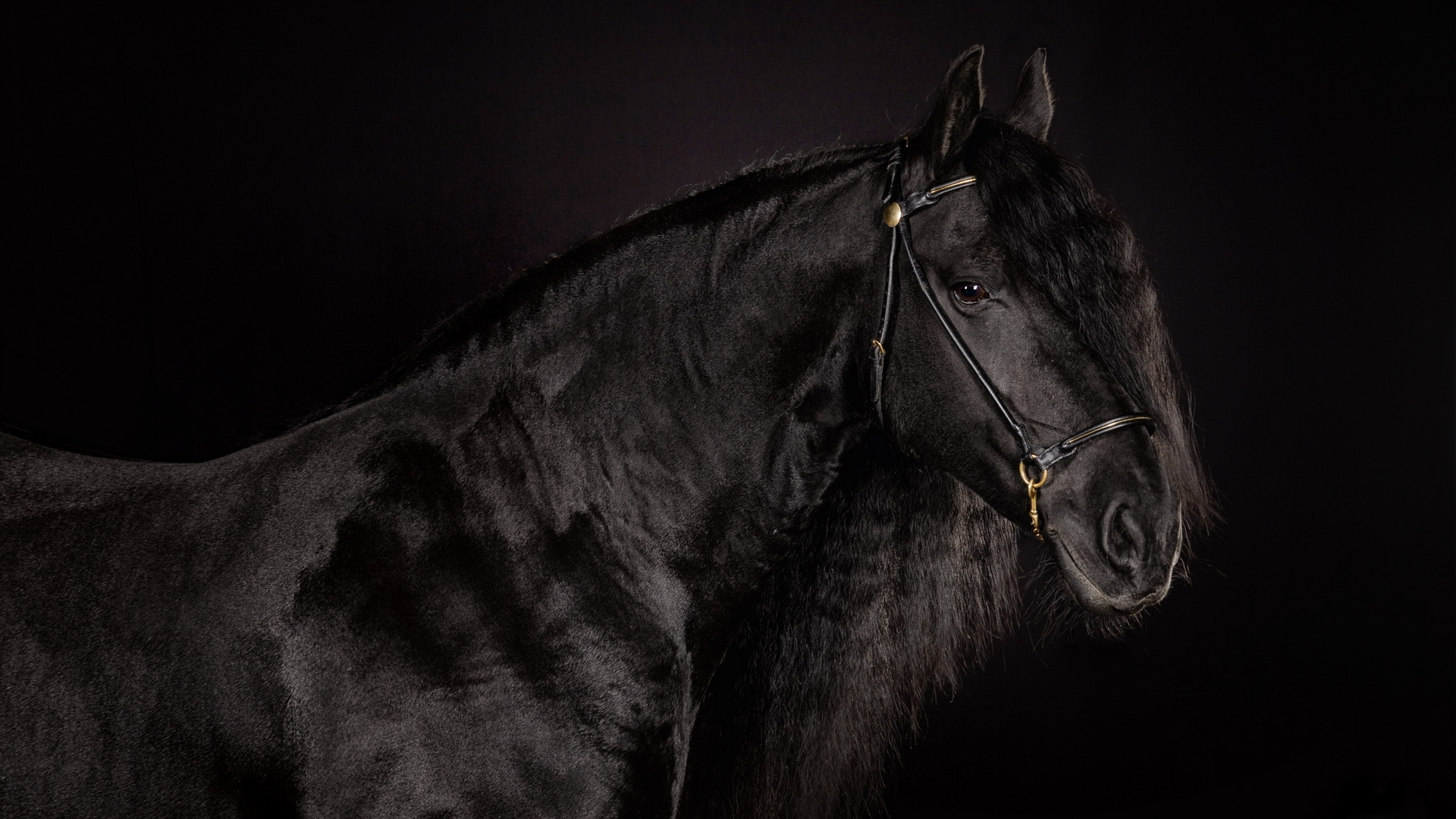 Download Free Black Horse Backgrounds Download Free Black Horse Hd Wallpaper Download 1920x1080 Download Hd Wallpaper Wallpapertip