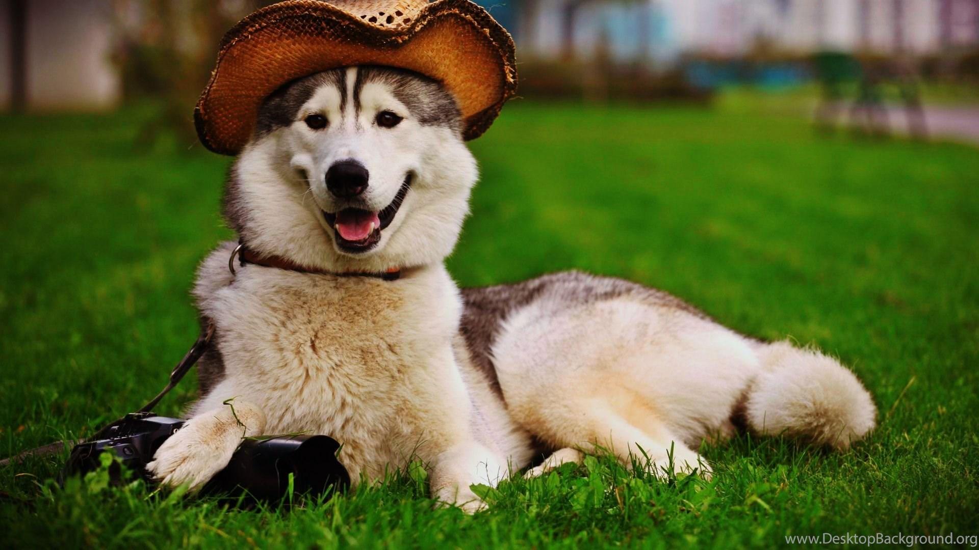 Hd Cute Dog Wallpapers Free For Desktop Best Pet Animals Pictures Hd 1920x1080 Download Hd Wallpaper Wallpapertip