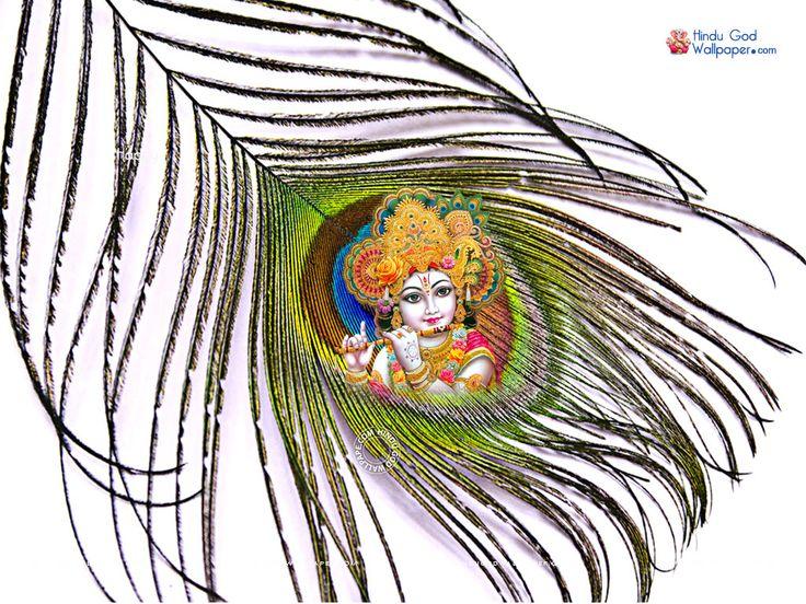 Mor Pankh Hd Wallpaper Download 736x552 Download Hd Wallpaper Wallpapertip