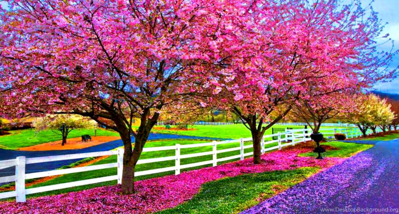 166 1664107 a beautiful spring day computer wallpapers desktop spring
