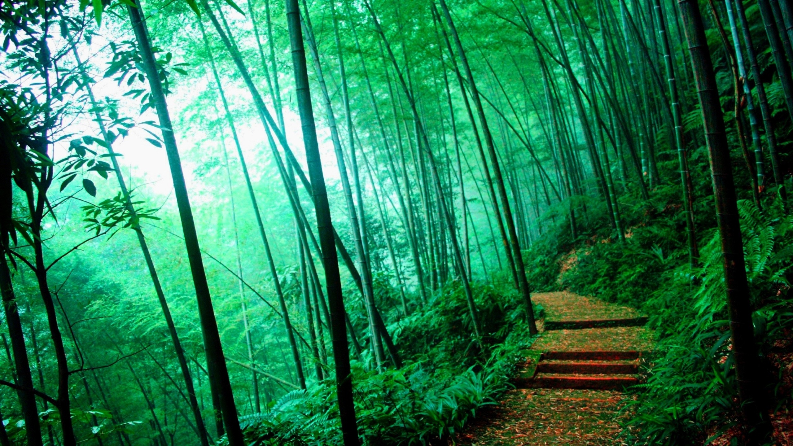 Nature Forest Backgrounds By Cherice Beddo On Goldwallpapers China Bamboo Forest Path 2560x1440 Download Hd Wallpaper Wallpapertip