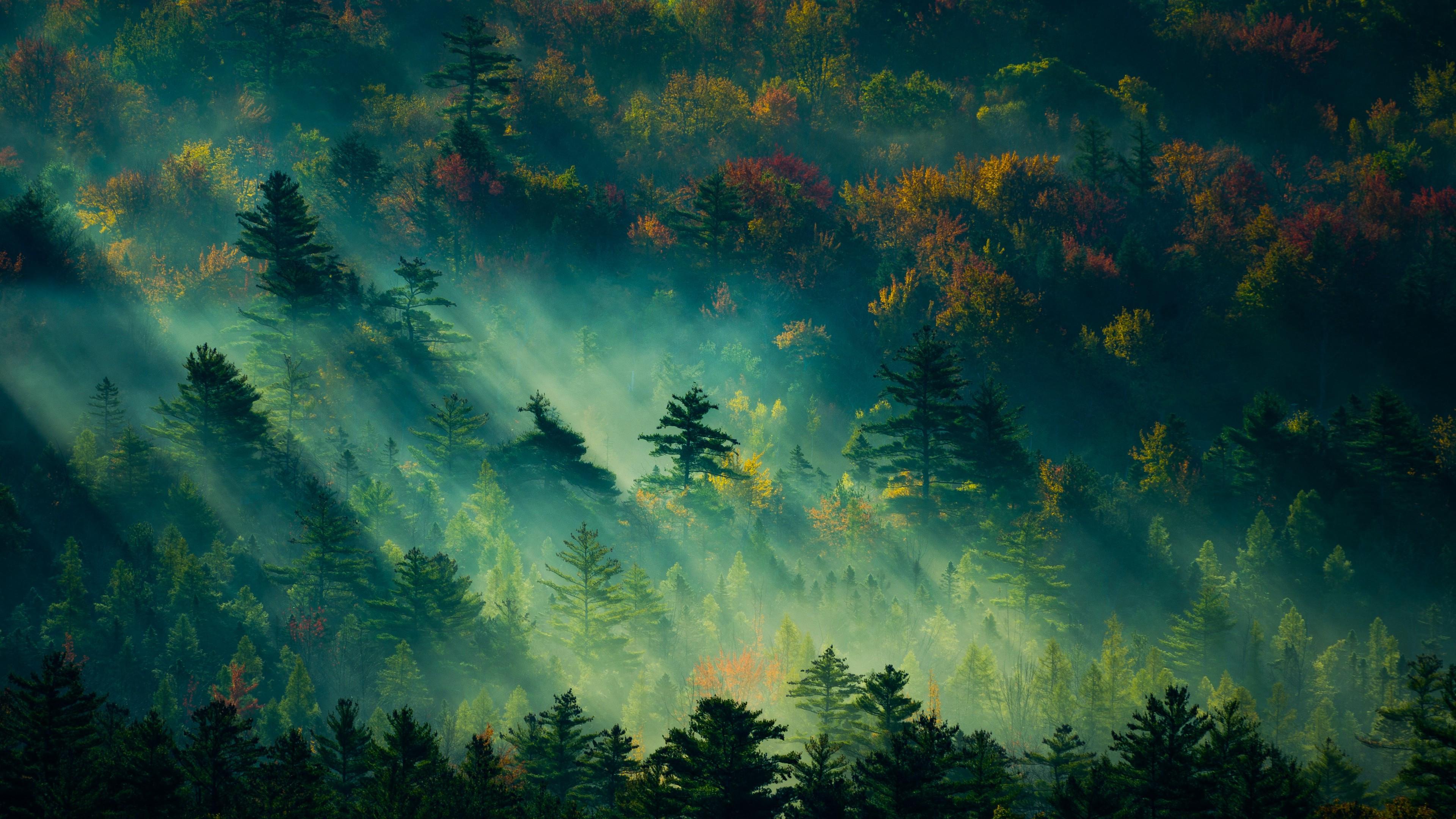 Forest Wallpaper 4k 3840x2160 Download Hd Wallpaper Wallpapertip