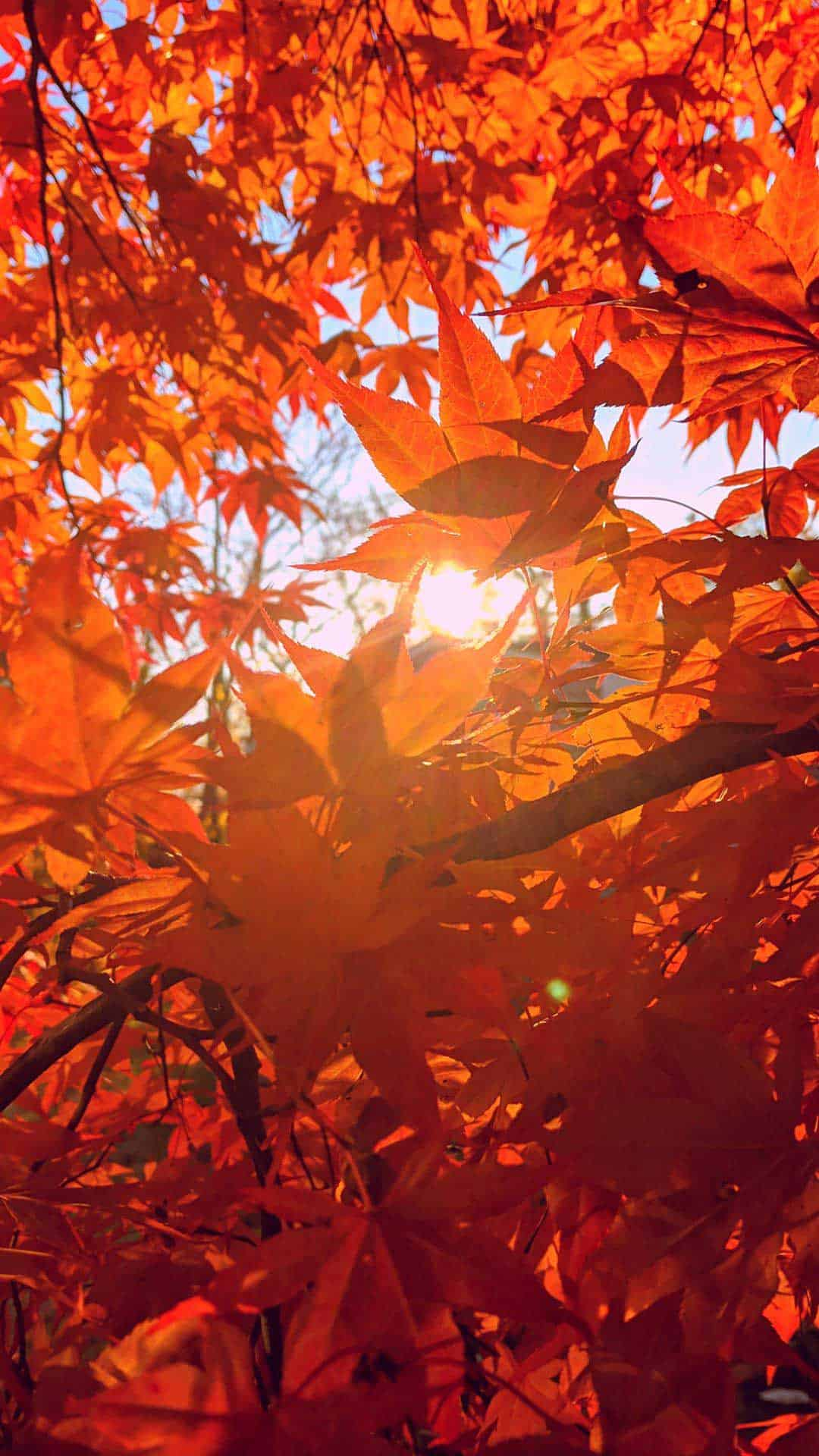 Aesthetic Background Pictures For Phone - Aesthetic Fall ...