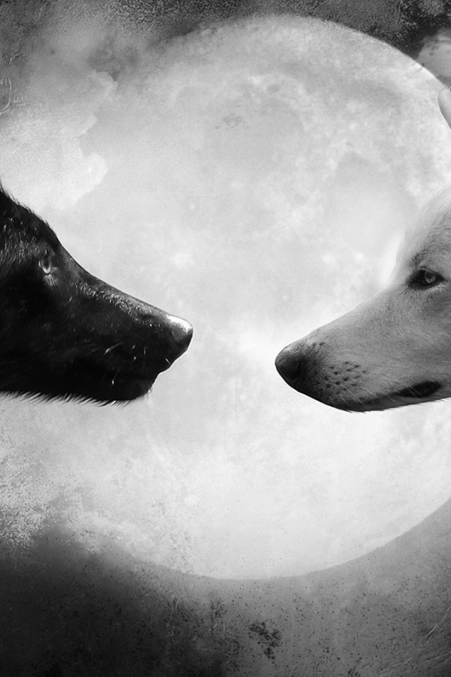 Iphone Wallpaper Black And White Wolf 640x960 Download Hd Wallpaper Wallpapertip