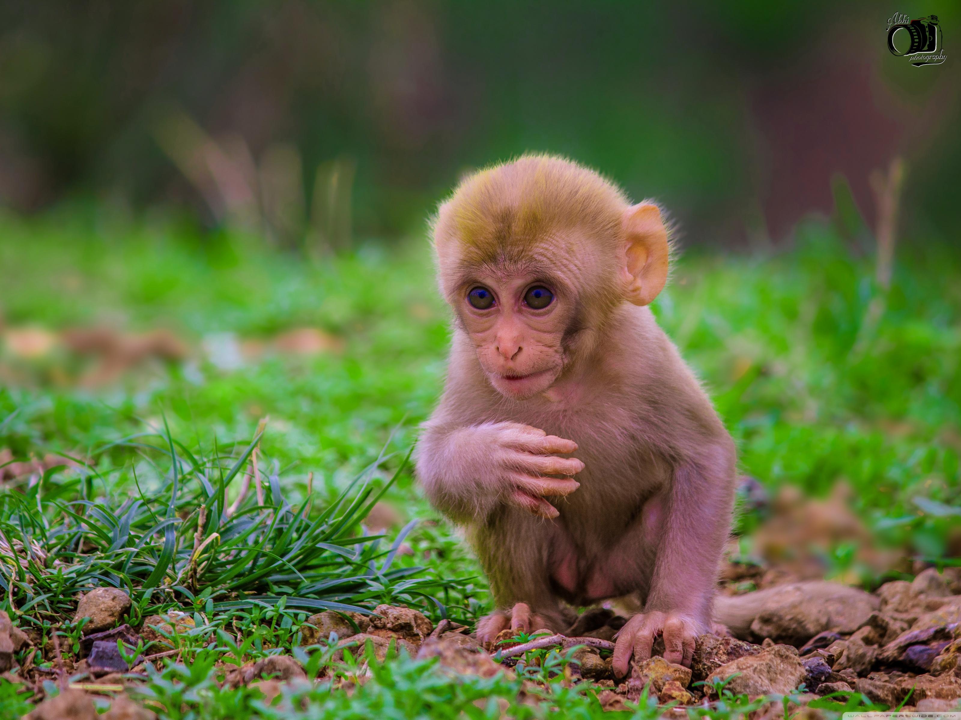 Baby Monkey Cute Monkey Monkeys 3200x2400 Download Hd Wallpaper Wallpapertip