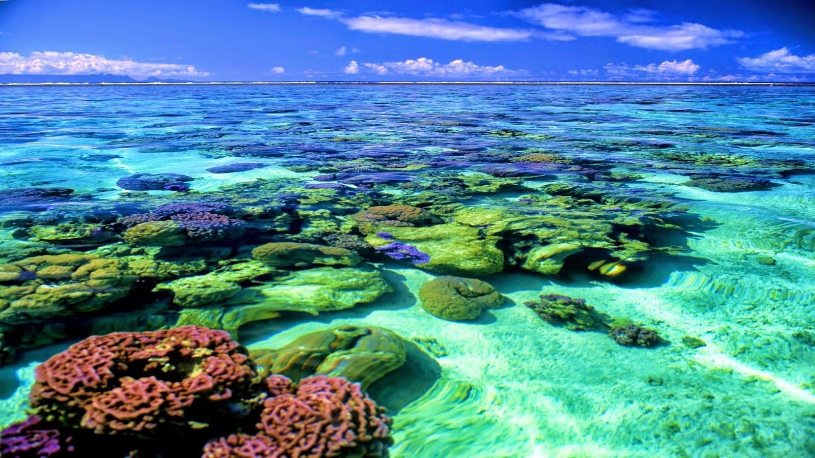 Coral Reef Wallpaper Hd - 1600x900 - Download HD Wallpaper ...