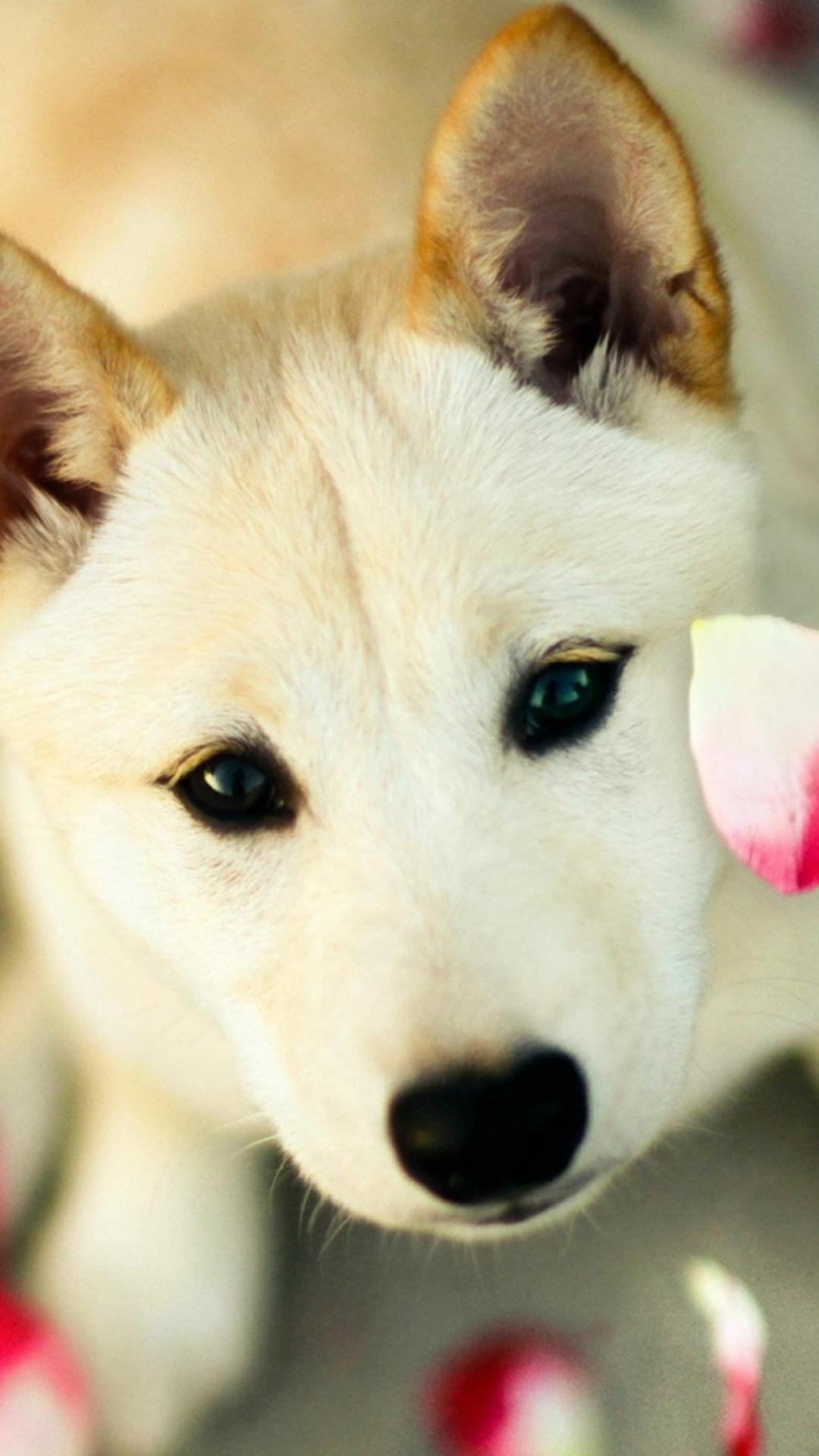 Cute Wallpapers Of Dog 1080x1920 Download Hd Wallpaper Wallpapertip