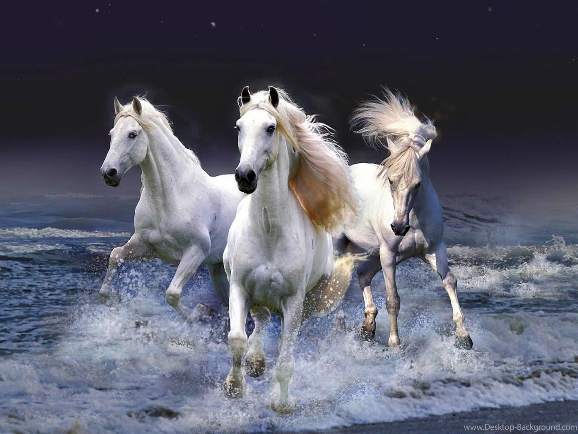 189 1893982 Seven Running Horse Wallpaper Find Hd Wallpapers Running Horse Hd 1152x864 Download Hd Wallpaper Wallpapertip