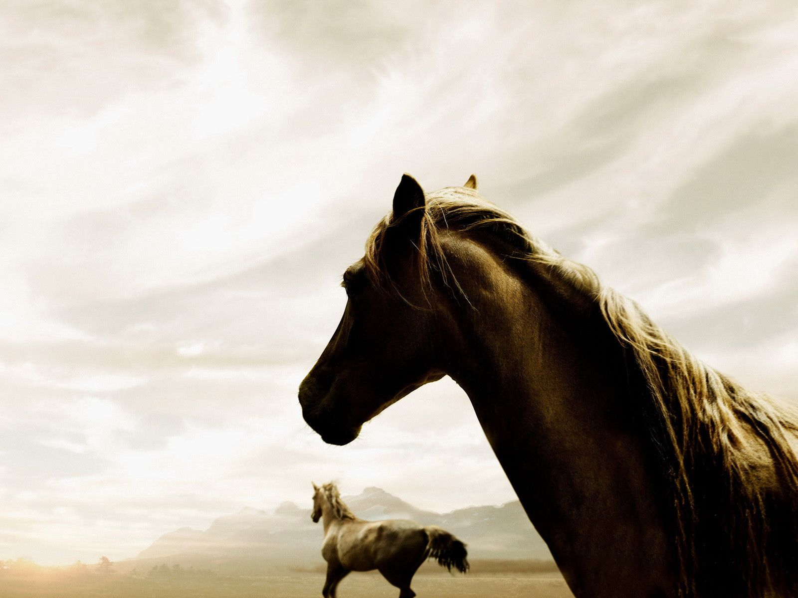 Aesthetic Black White Horse 1600x1200 Download Hd Wallpaper Wallpapertip