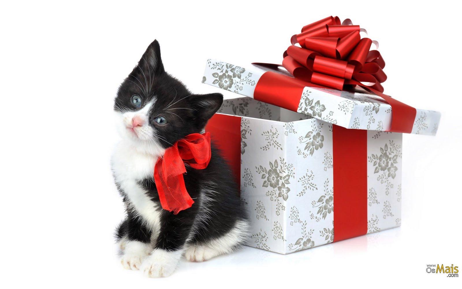 185 1858903 christmas black and white kitten