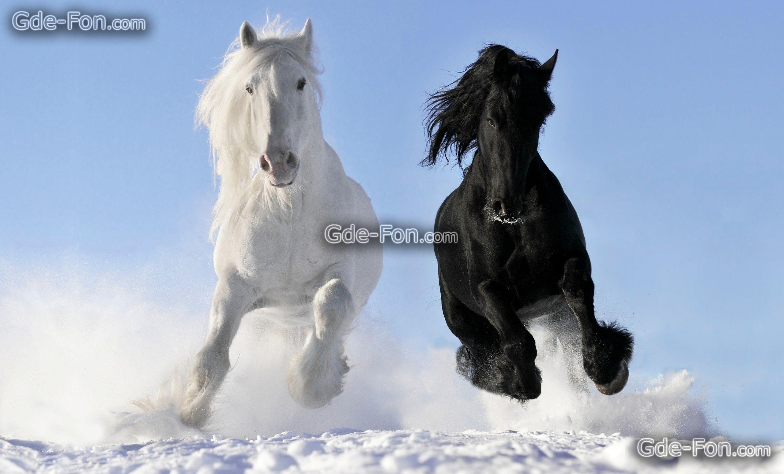 Utiful Wild Horses Wallpaper Black And White Horses 2560x1550 Download Hd Wallpaper Wallpapertip