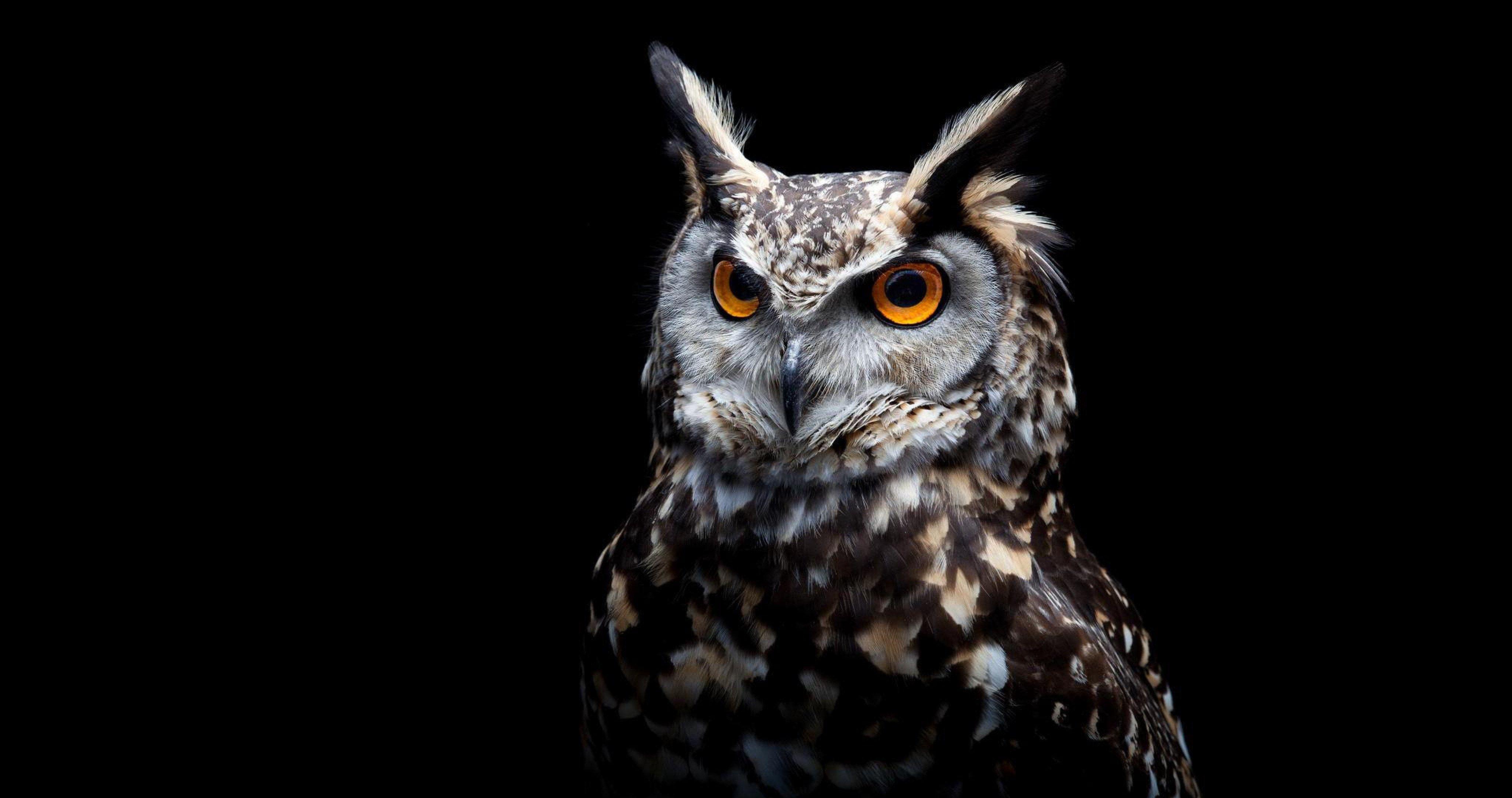 Owl Eyes Black Background 4096x2160 Download Hd Wallpaper Wallpapertip
