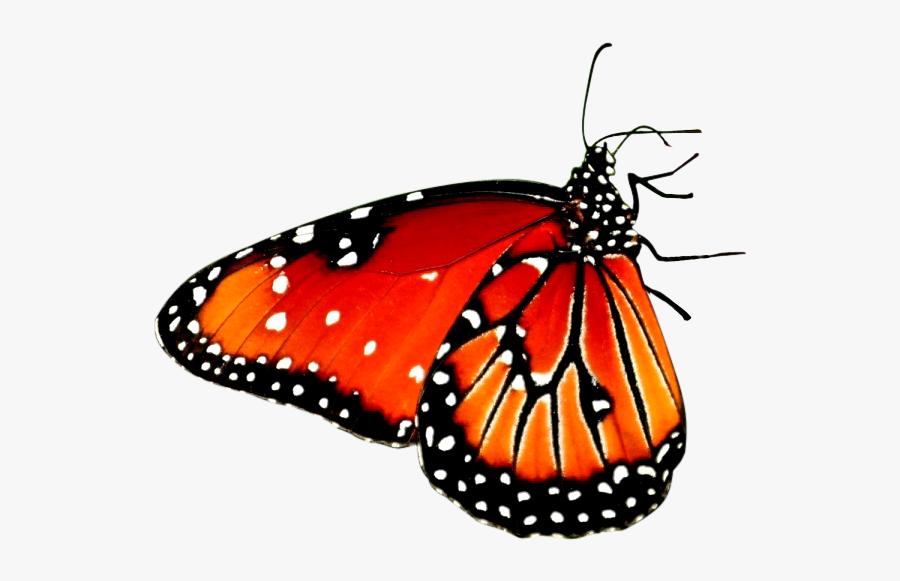 Beautiful Butterfly Desktop Wallpaper High Definition Mobile New Hd Wallpapers 1080p 900x581 Download Hd Wallpaper Wallpapertip